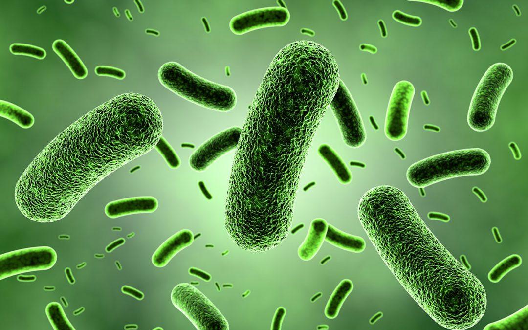 Prevenção e Controlo de Infeções